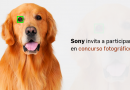 Sony invita a participar en concurso fotográfico